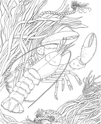 Crawdad Crayfish Coloring Page From Crawfish Category. Select From