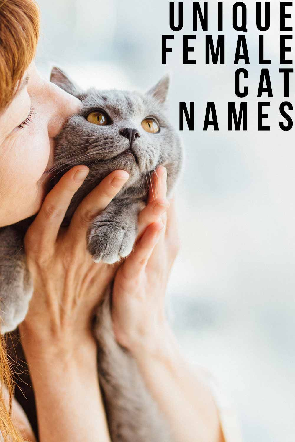 Unique Female Cat Names The Best Original Girl Kitty