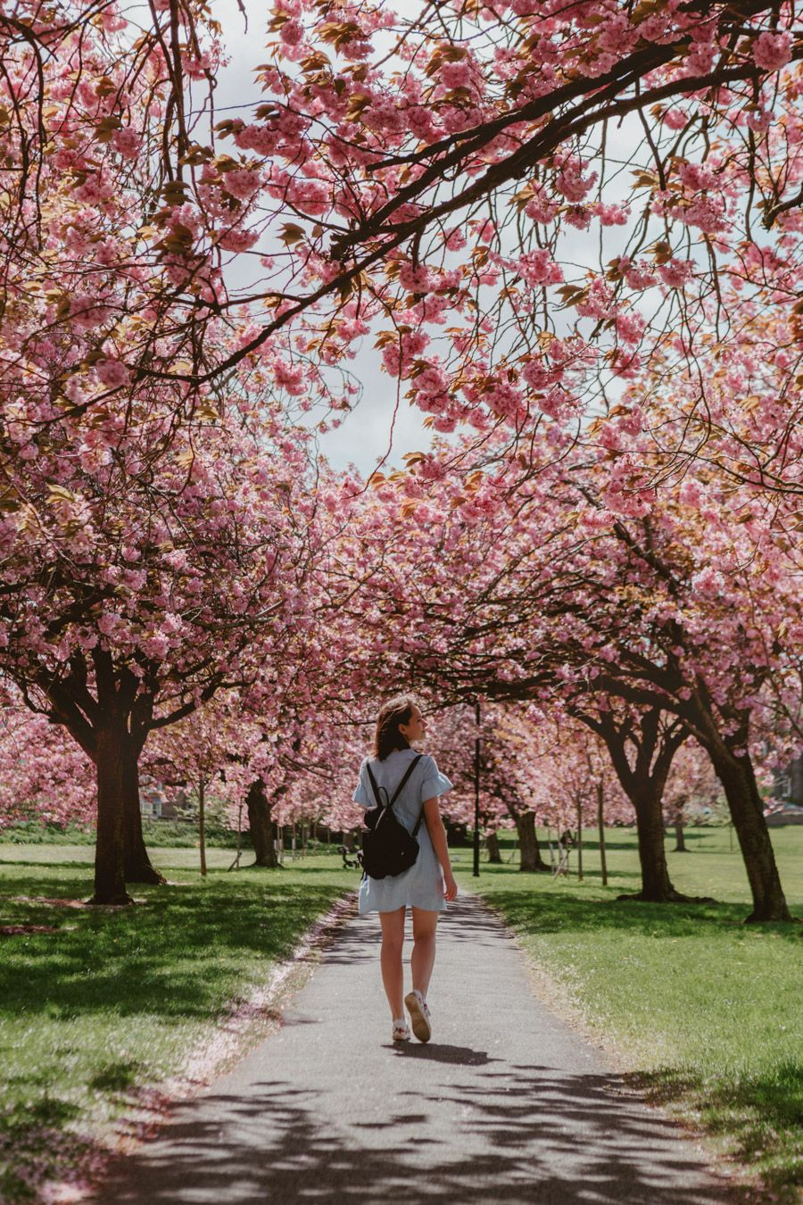 The Best Cherry Blossom In The Uk Monalogue Cherry Blossom Instagram Blossom Trees