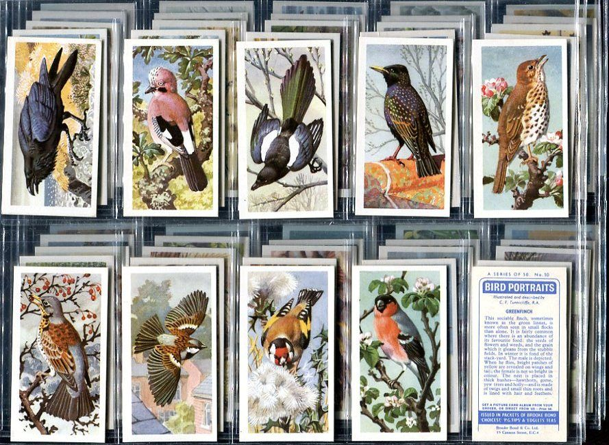 Bird Portraits 1957 Cards  PG Tip Collector Cards