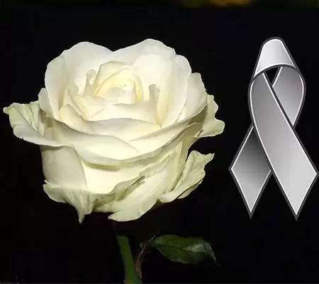 Imagenes De Duelo Con Rosas Blancas Rosas Blancas Con Frases Rosas Blancas Imagenes De Flores Rosas