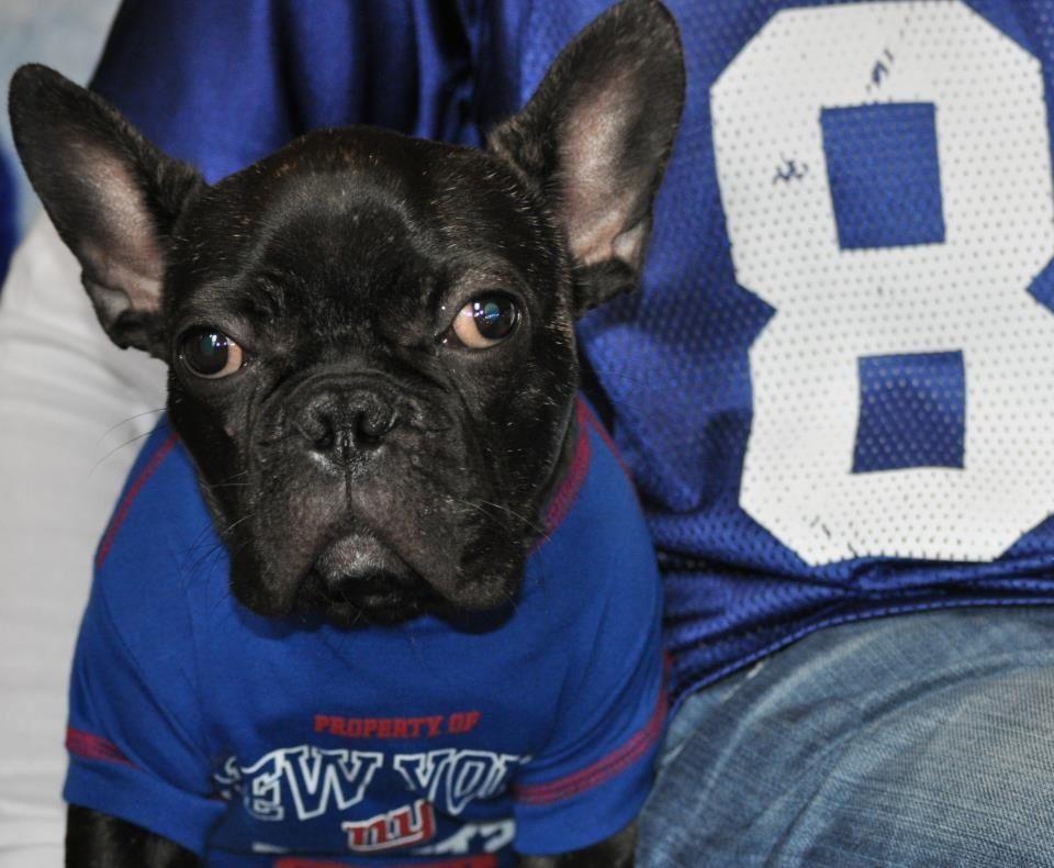 New York State Of Mind Go Giants French Bulldog Bulldog New