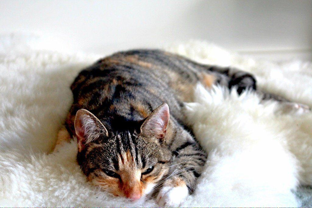 Can cats drink milk catsaresmart cats cat adoption