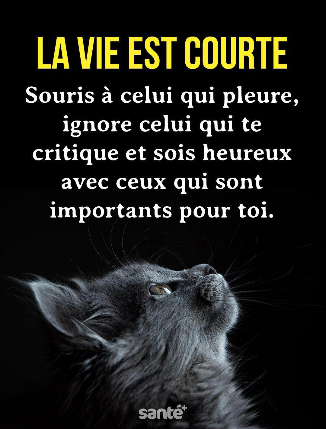 La Vie Est Courte Citation : courte, citation, Citations, Courte,, Citation, Heureux,