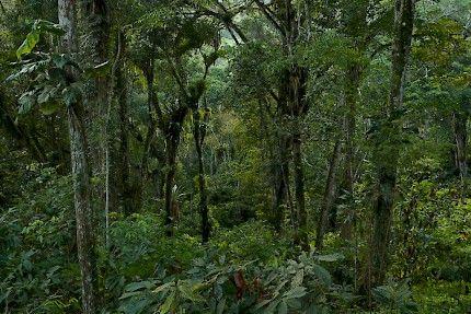 Fazenda Almada :: Die Natur