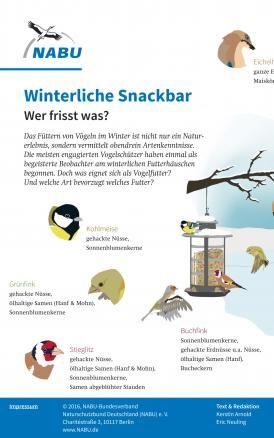 Experte Rat Vogel Im Garten Ganzjahrig Futtern In 2020 Vogel Im Garten Vogel Im Winter Insektenhotel
