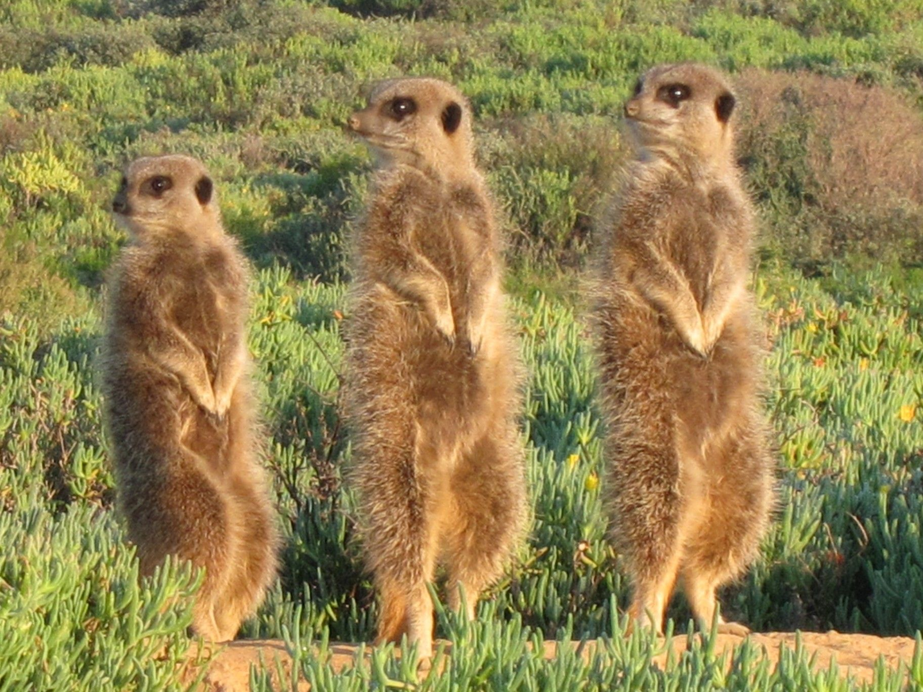 South Africa Wild Animals | ... South Africa – Pictures of ...