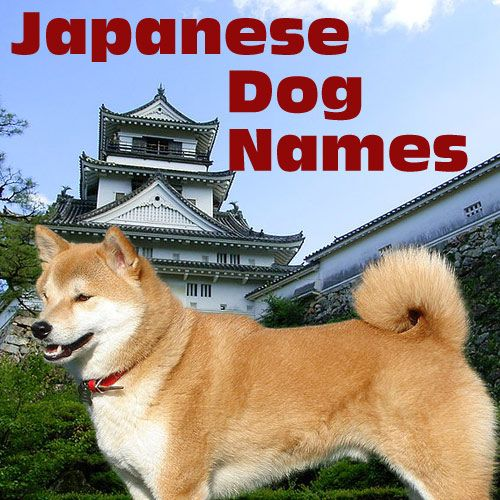 Japanese Culture Dog Names Names For Dogs From Japan And From Japanese Culture Dog Names Japanese Dogs Dogs