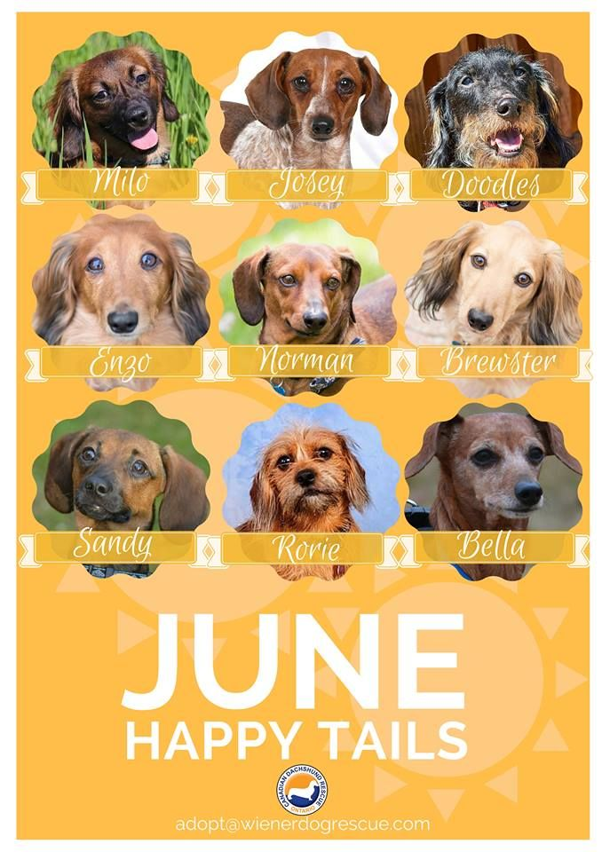 We Are Thrilled To Announce 9 Of Our Foster Dogs Have Found Amazing Forever Homes In The Month Of June We Re So Excited For Them Congr Foster Dog Dogs Happy