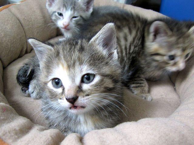 8 Tips for Socializing Kittens Newborn kittens, Pregnant