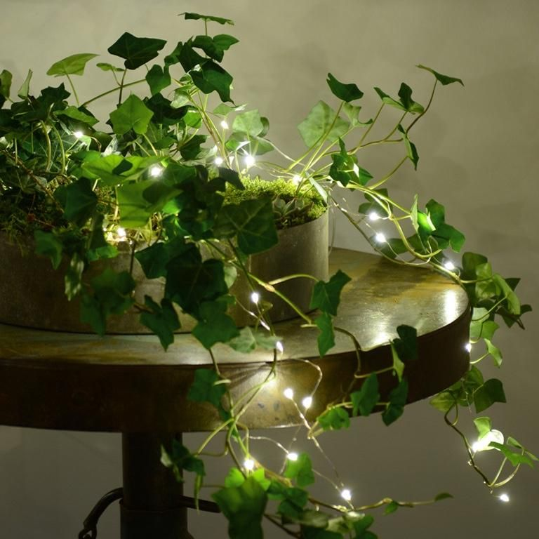 The Ground Creeping Ivy Plants Go Well With Fairy Lights Fairy Lights Decor Outdoor Fairy Lights Fairy Lights