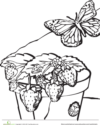 Strawberry Plant Coloring Page | Worksheets