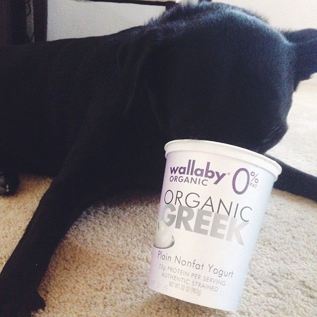 This pup knows where to find the good stuff. Thanks @makingthymeforhealth for posting this cute pup pic!