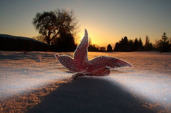 20 Examples Of Low Angle Photography | Winter photography