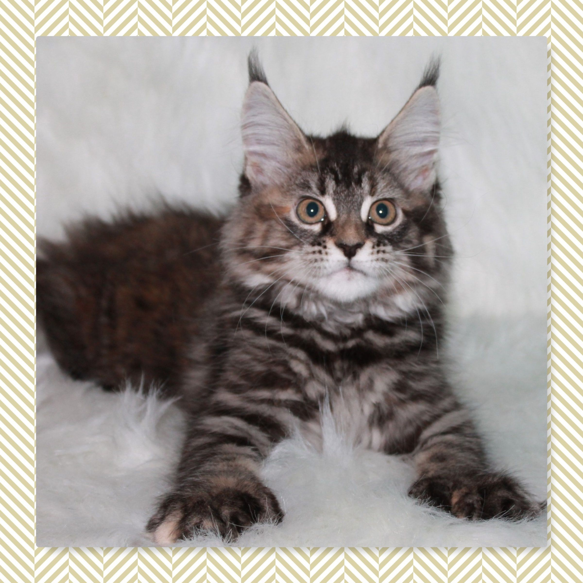 Pin On Cute Kitty Pictures