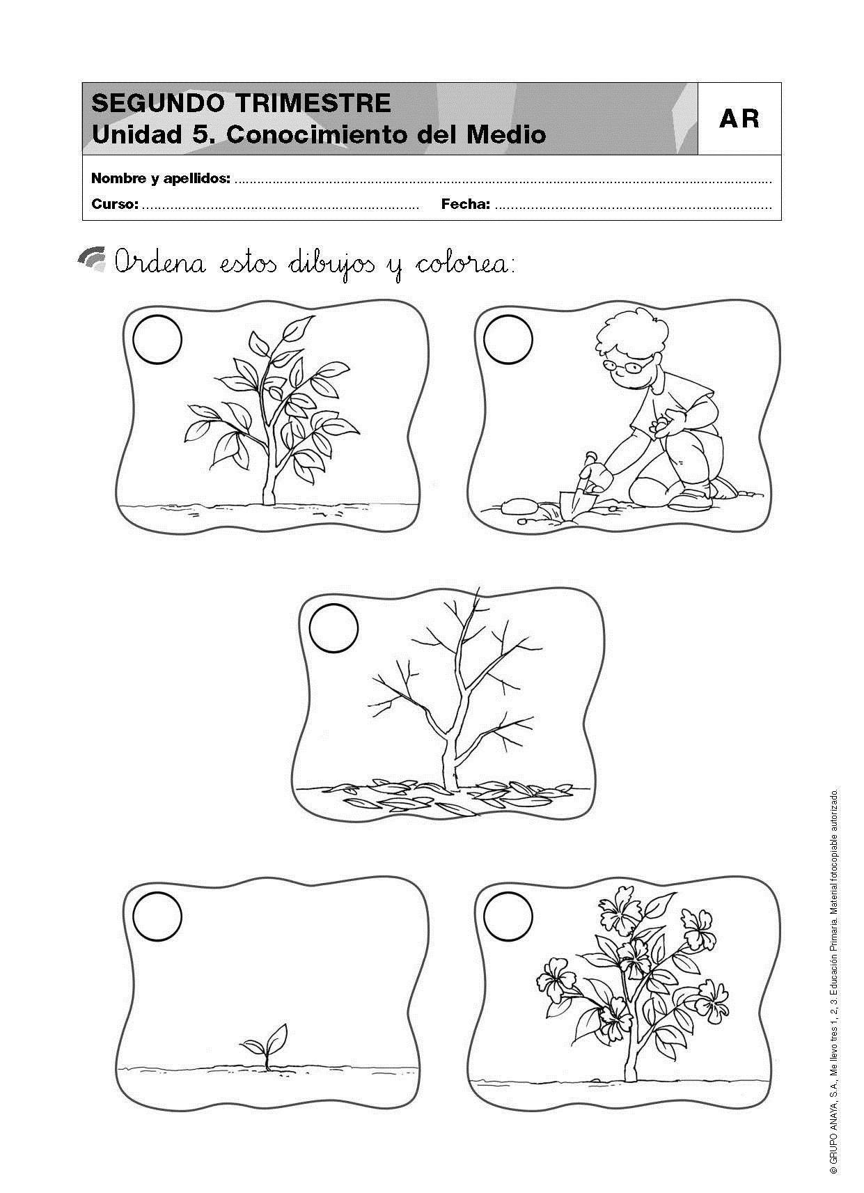 Secuencia del crecimiento de una planta para nivel inicial for Como crecen los arboles para ninos