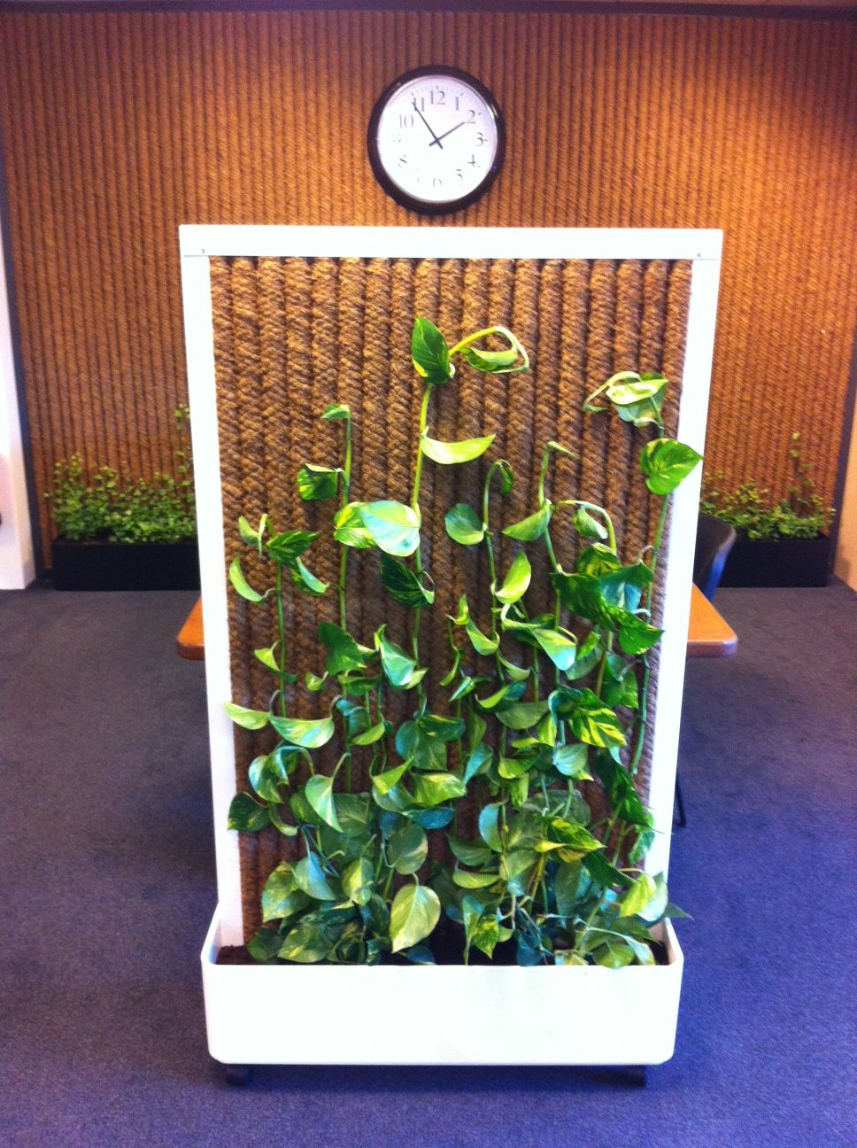 Kokowall Mobile Office Divider Made Of Natural Cocos Fibre And A Steel U Frame Skindaspus Is Growing On The Cocos For More Information See Kokosystems Nl