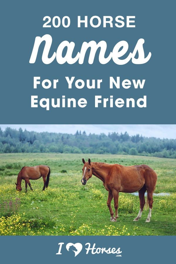200 Horse Names For Your New Equine Friend in 2020 Horse