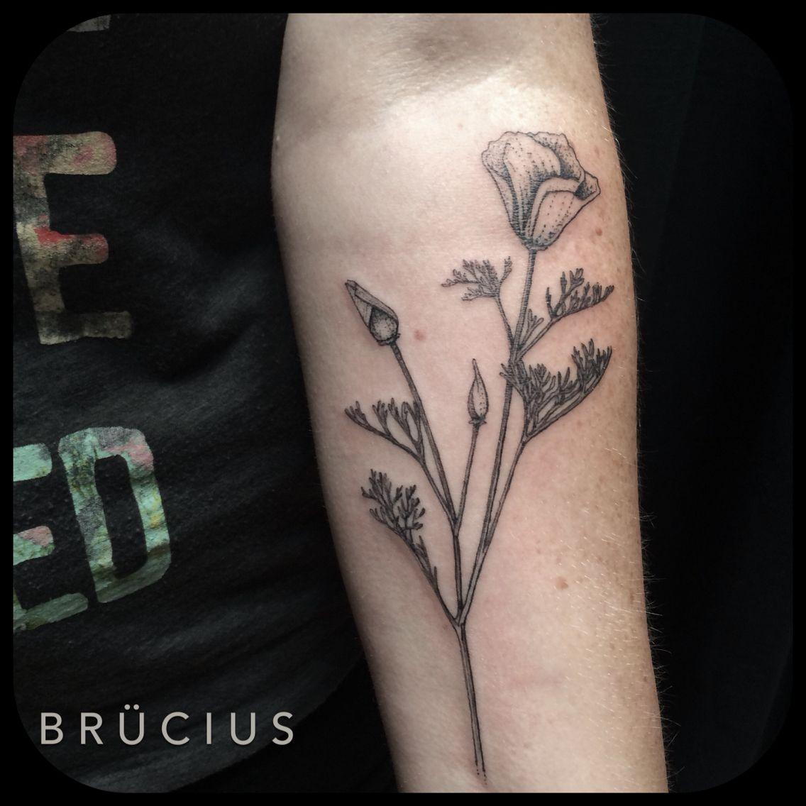 f8eb6e166 #BRÜCIUS #TATTOO #SF #SanFrancisco #brucius #natural #science #engraving  #etching #sculptoroflines #dotwork #blackwork #penandink #lines  ##california #poppy