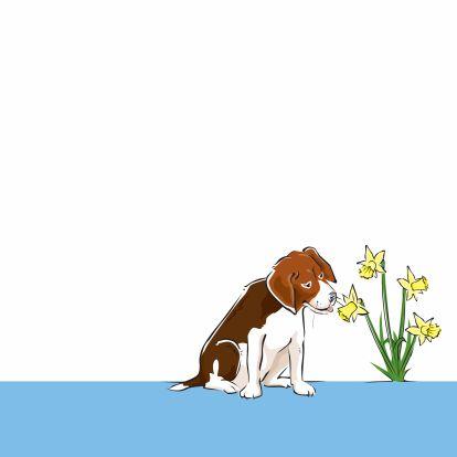 YVON lente voorjaar narcis hond 3
