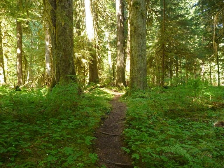 LoverS Lane Trail Near Sol Duc Falls Photo And Trip Report By