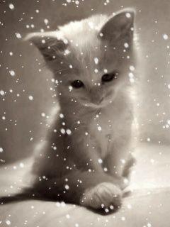 Viele Bilder Katzen Tapeten Susse Hunde Und Katzen Niedliche Katze
