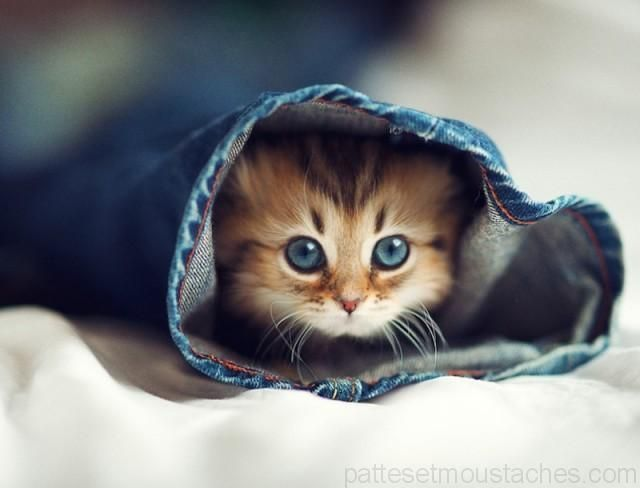 Chaton le plus mignon du monde photo bb animaux chaton - Les chats gratuits ...