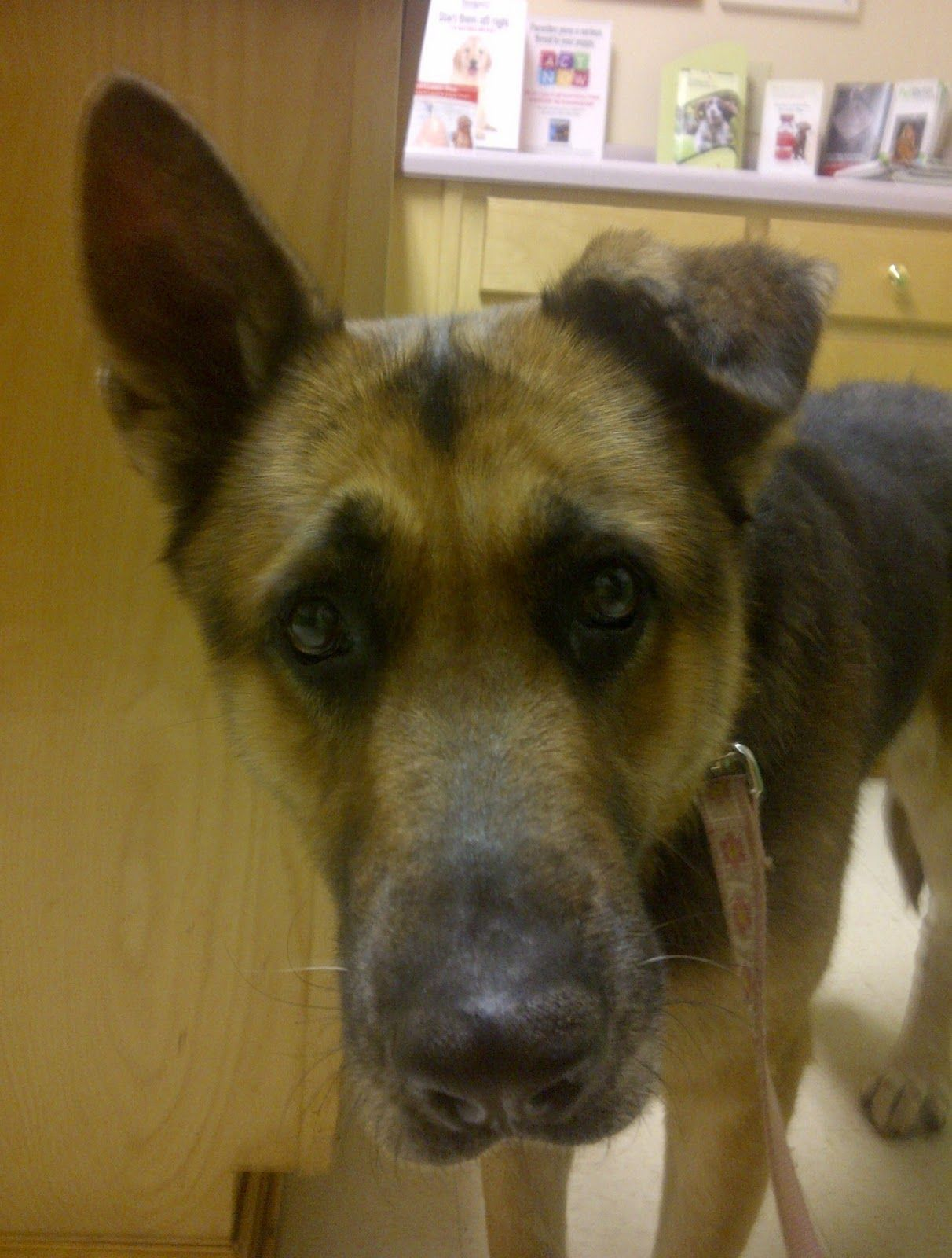 Best Floppy Ears Brown Adorable Dog - 16331db1dc713383c467d35074d20274  2018_472876  .jpg