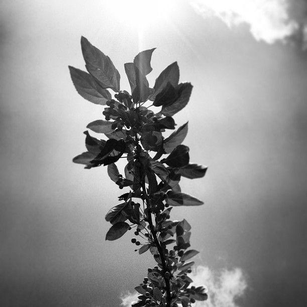 even in black & white..