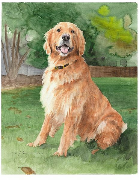 How To Paint A Golden Retriever Golden Retriever Watercolor By