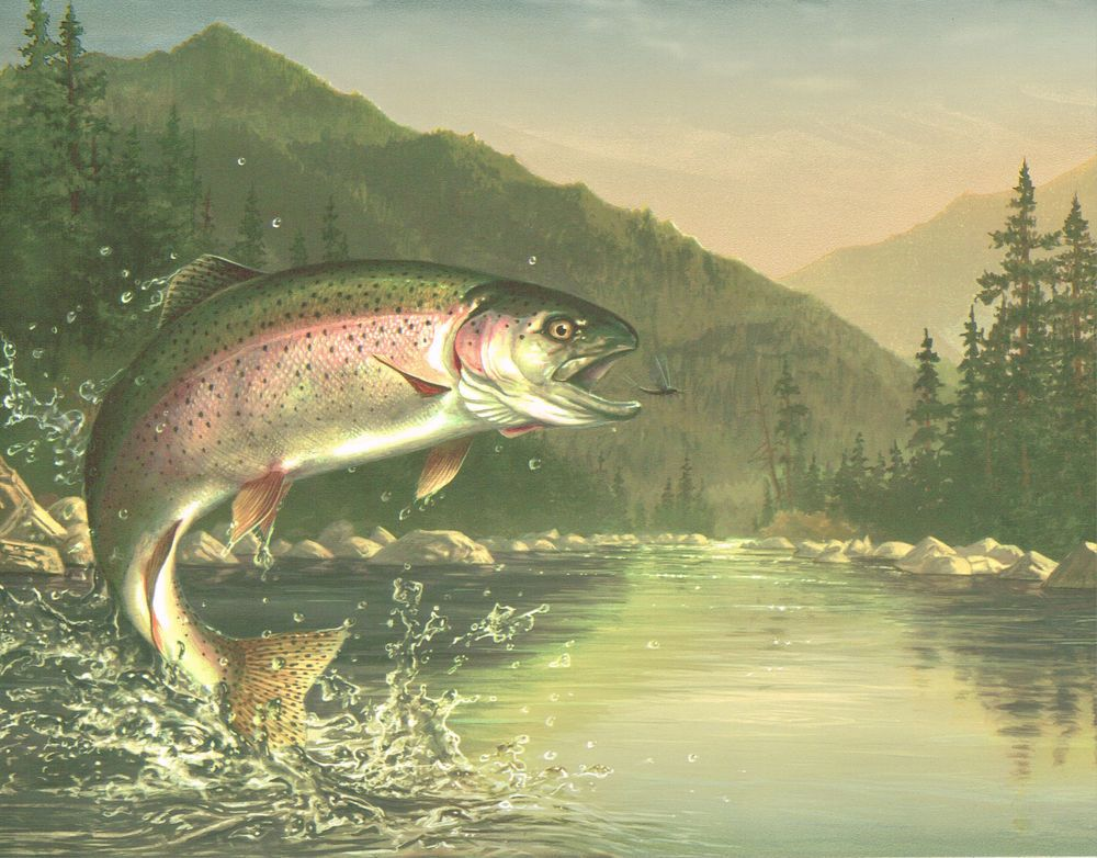 FLY FISHING CHECK OUT THAT RAINBOW TROUT AFTER THE Wallpaper BordeR Wall