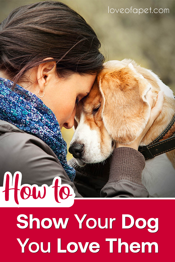 How To Show Your Dog You Love Them 10 Way Love Of A Pet Your Dog Dog Kisses Dogs
