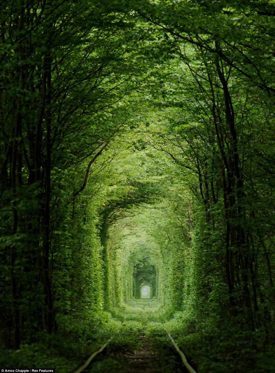 Just the ticket for popping the question The treelined romantic 'tunnel of love' railway line that's so beautiful it's beyond beleaf (just watch out for the train) is part of Tunnel of love ukraine - India may have the Taj Mahal, and Paris is the city of love, but the Ukraine has this incredible, ethereal Tunnel of Love