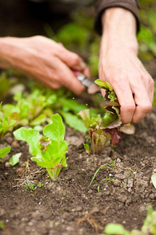 Hands that till the soil..... | Our Hands..... | Pinterest | Gardens ...