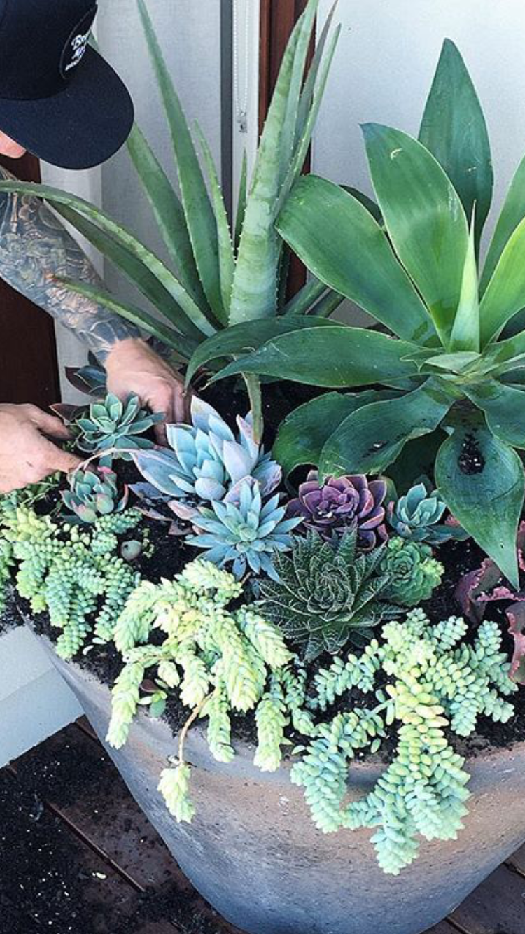 Succulent Pot For Front Door Entrance Front Door Planters Front Door Plants Door Planter