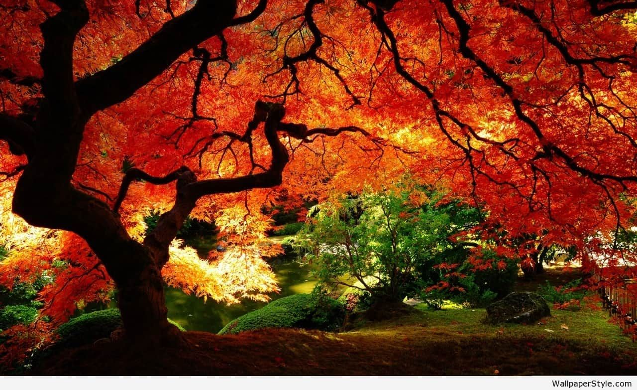 Pin by julia on HD Wallpapers | Pinterest | Autumn, Autumn and