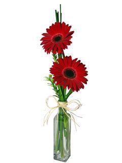 arranjo no aquario de vidro e flores com g rbera vermelha