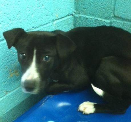 Adopt Eli On Dogs Dogs And Puppies Animal Shelter