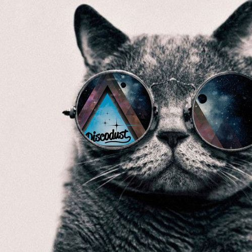 Let There Be Techno Liveset Techno Cool Cats Animal Art Cat wearing glasses wallpaper hd