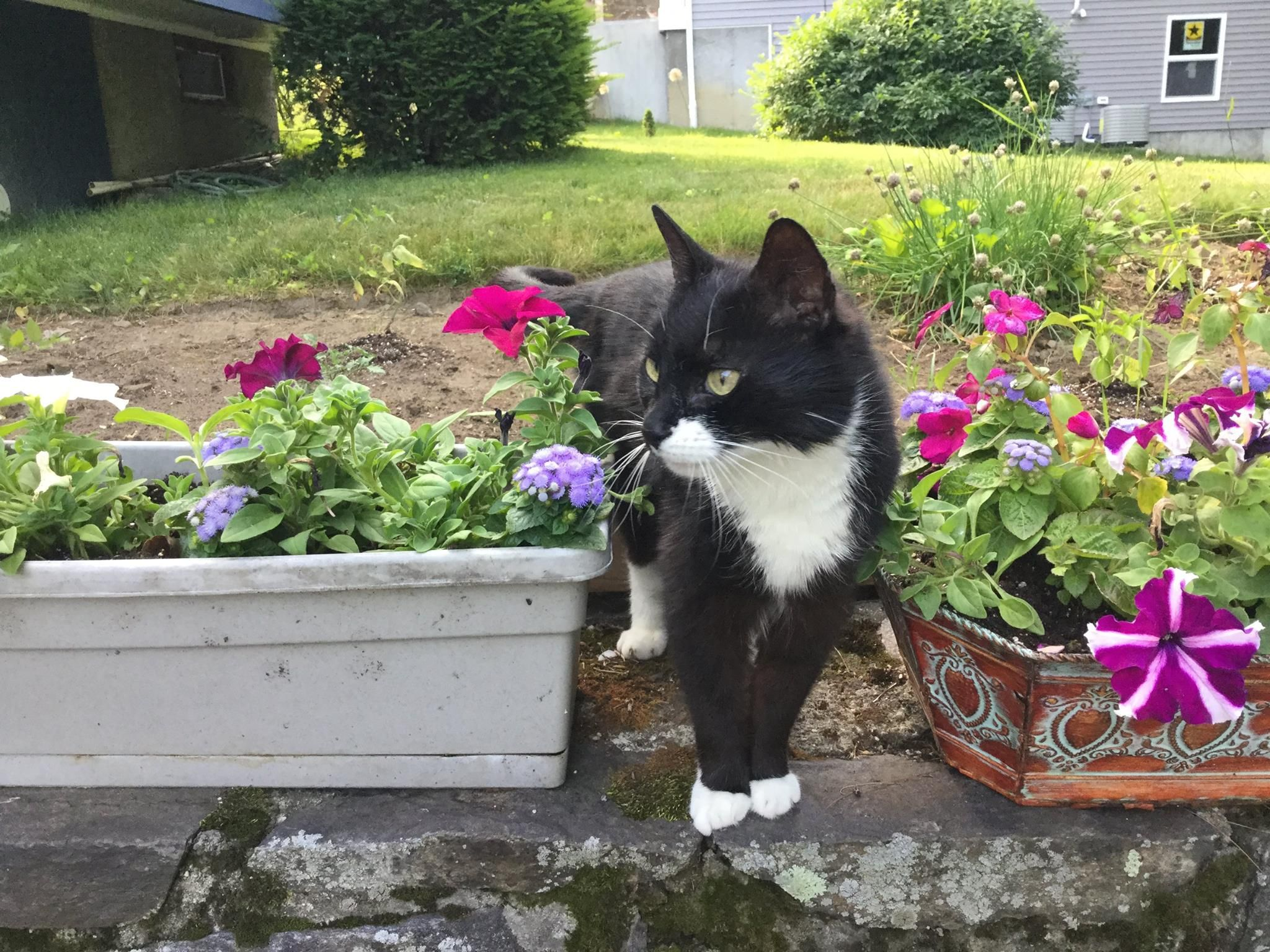 Neide BauerBrookfield CT Lost Pets black white June 25