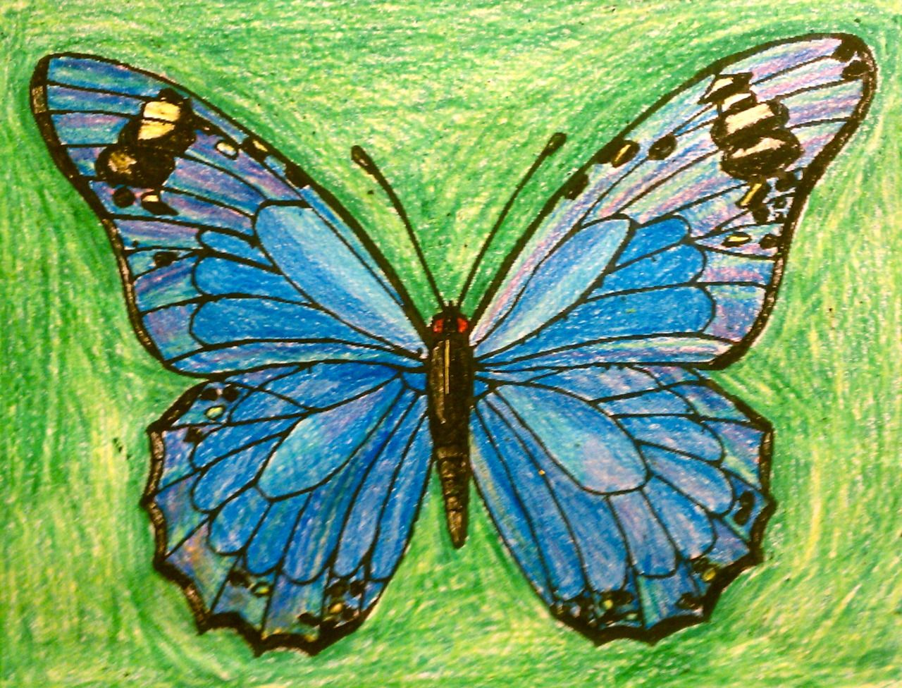 butterfly coloring pages | Coloring | Pinterest | Butterfly