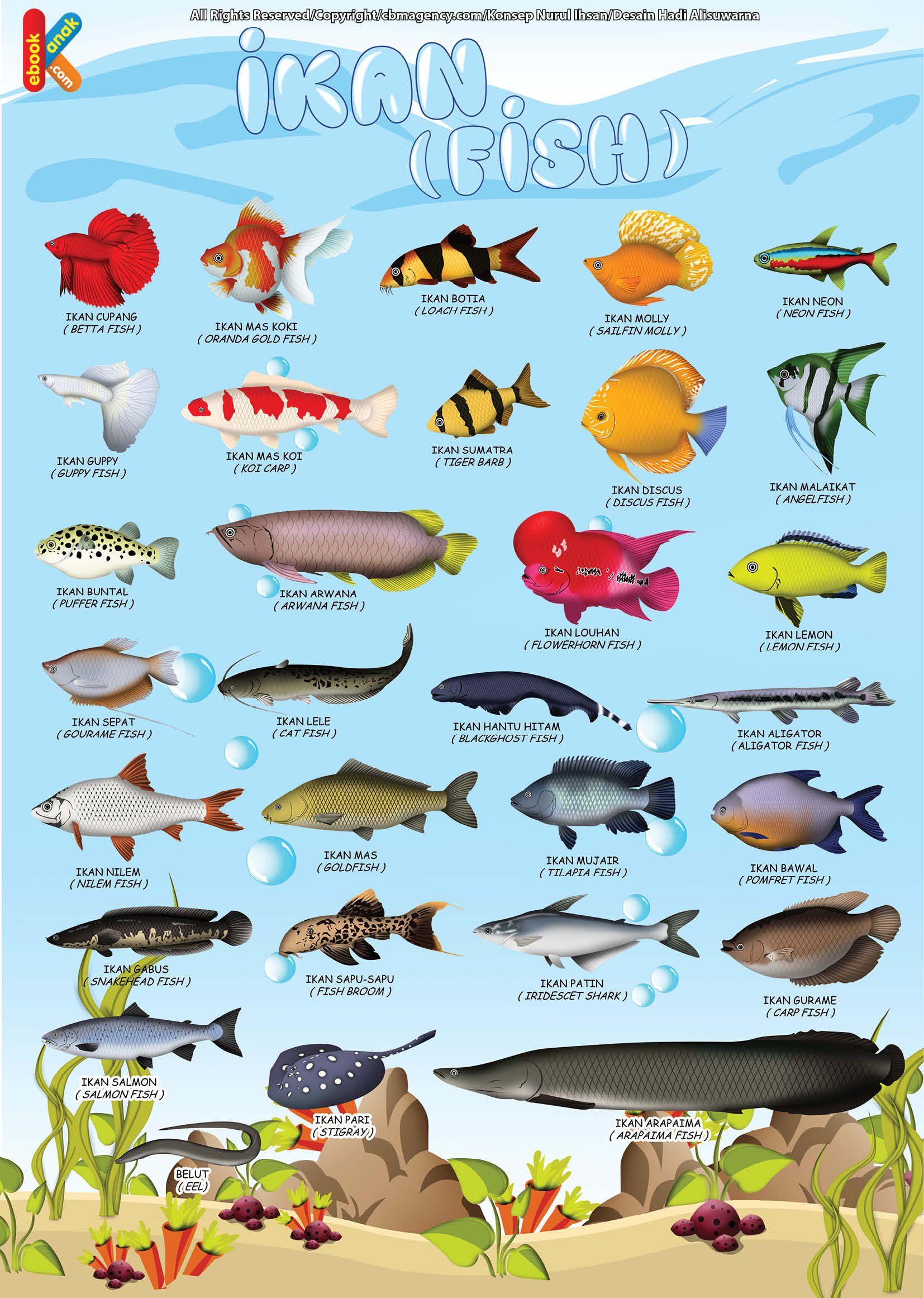 Poster Belajar Mengenal Ikan 2 Bahasa Ikan, Poster