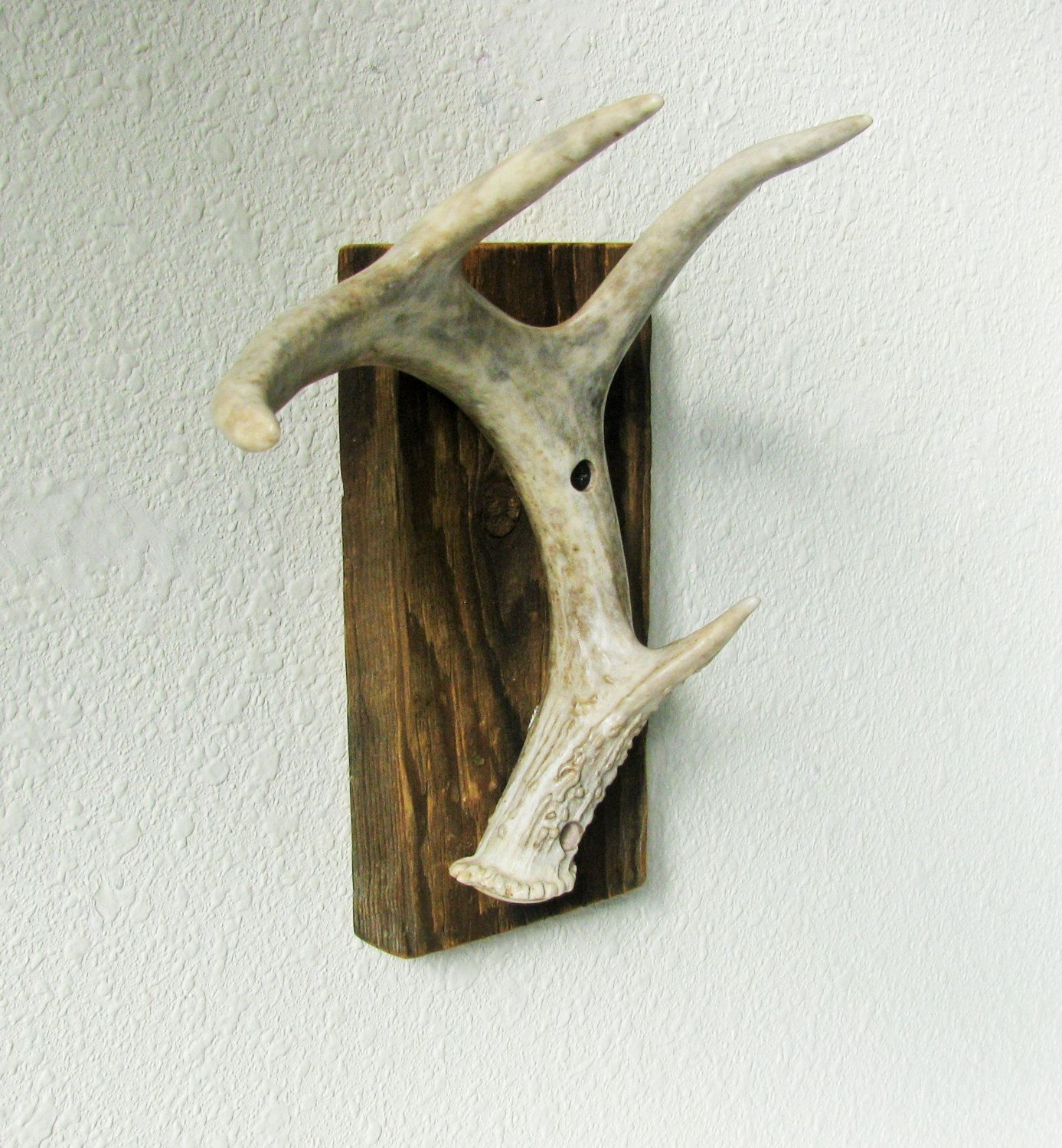 Natural three point with eyeguard Whitetail Deer Antler shed Wall Hook on  Barnwood for towel hook, hat rack, hunters gift, mancave decor