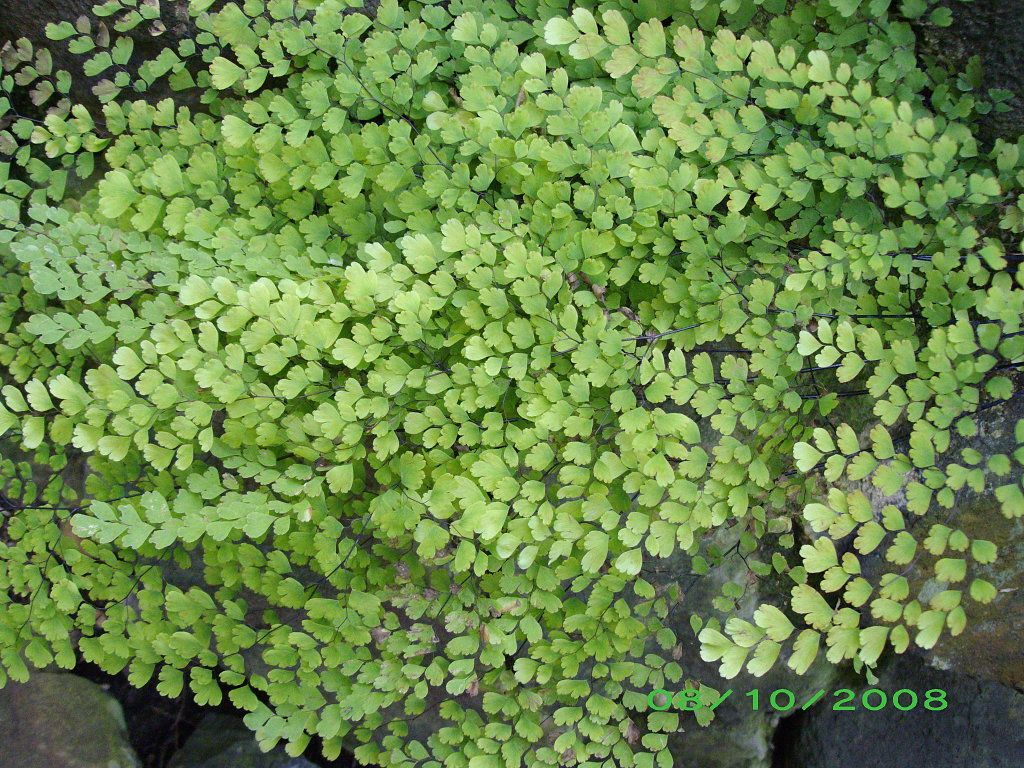 Helechos nature forest ferns moss pinterest for Plantas ornamentales helechos
