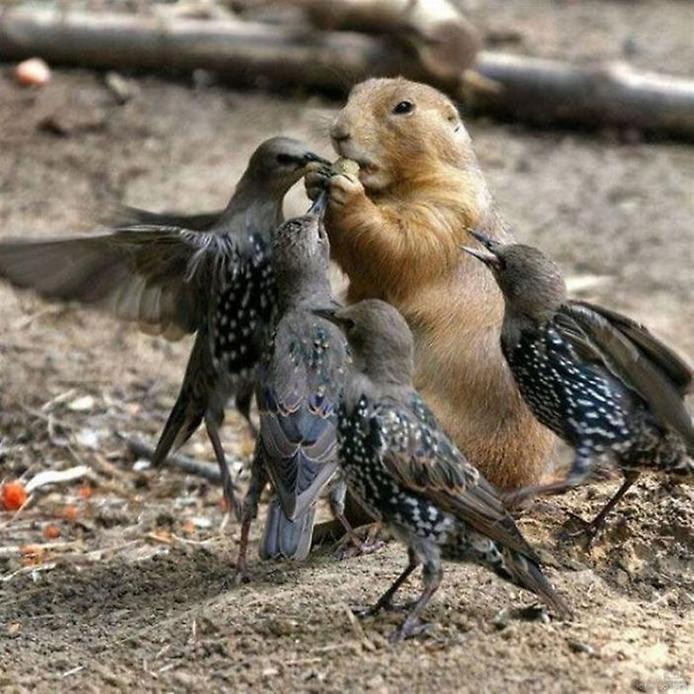 смешные птицы картинки