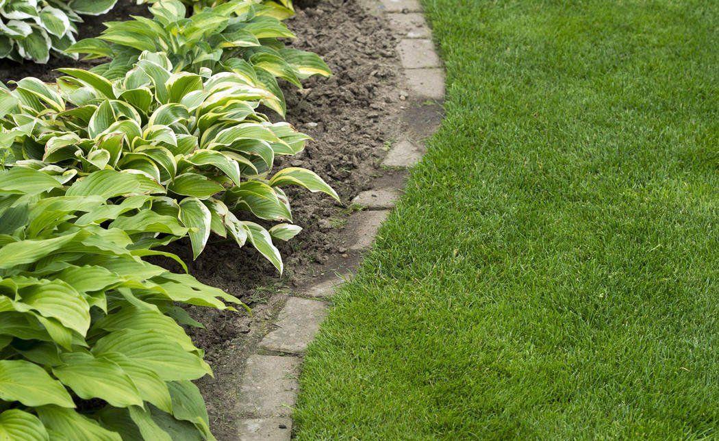 Rasenkantensteine Verlegen So Wird S Gemacht Rasenkantensteine Rasenkanten Garten Bepflanzen