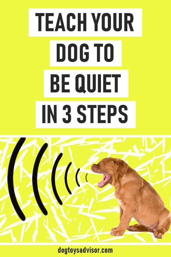 Teach Any Dog To Be Quiet And To Stop Barking Stop Dog Barking Dog Training Obedience Dog Training