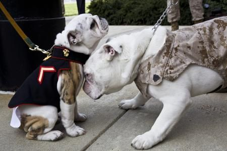 Marine Corps Commandant With Images English Bulldog