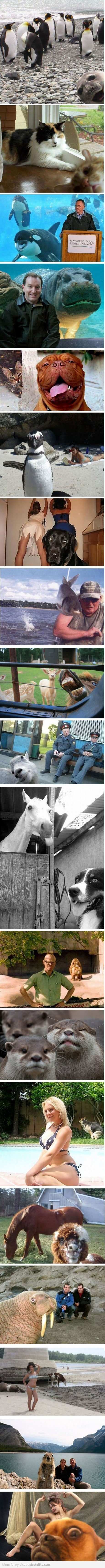 photobombing animals ahahah  these are really funny!