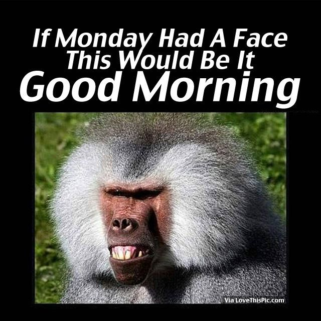 If Monday Had A Face, This Would Be It. Good Morning